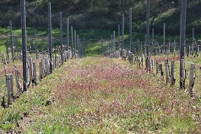 Vigne aux Côtes Vdef.jpg