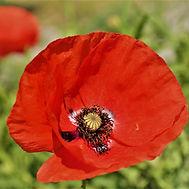 Fleur pour Morgon Vdef.jpg
