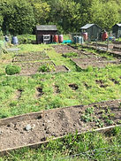 Image of Allotments