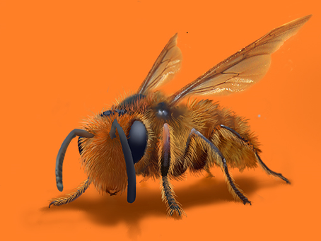 The NZ Building Economist... A Native Bee-Building Story