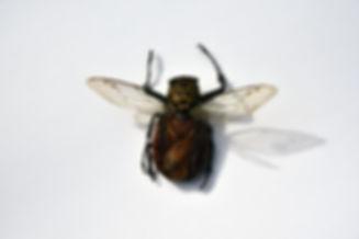 bug 4.jpg