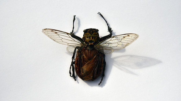 The Insect Series, 2019