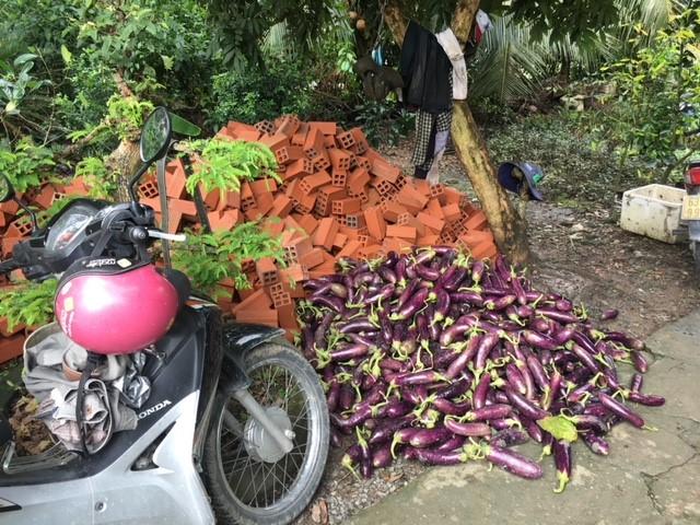 eggplant and bricks
