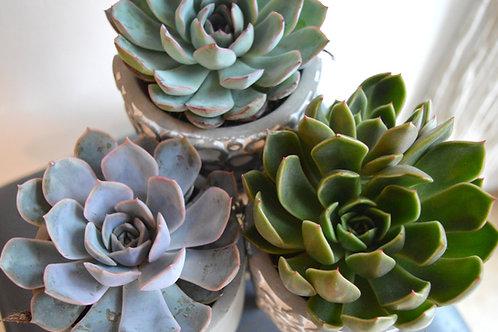 Tripod Succulent Pot
