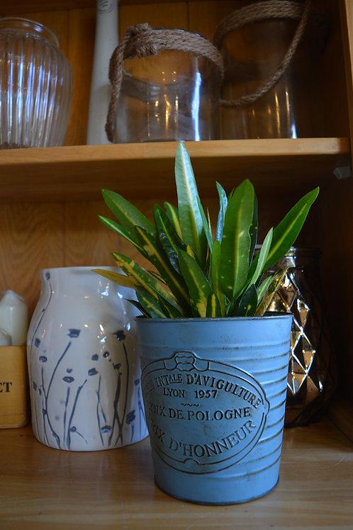 Houseplant in Pot