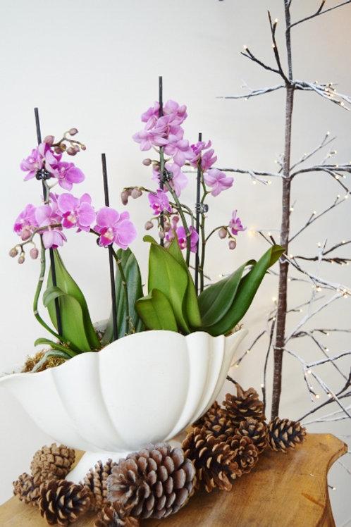 Vintage Orchid Planter