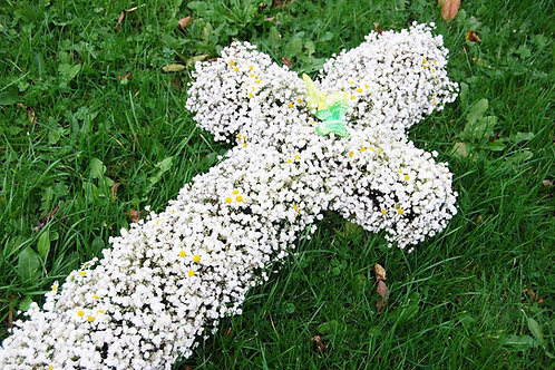 Gypsophila Cross