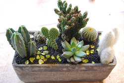 Planted Designs Horwich Delivery