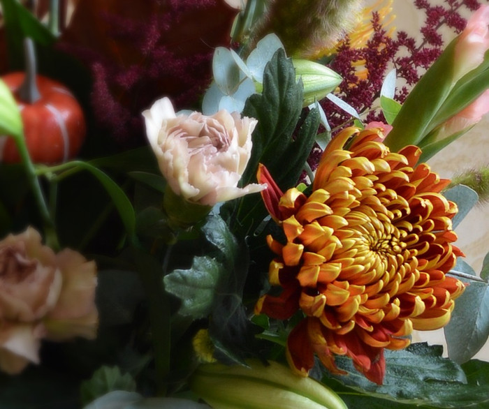 Feeling Cosy? - September's Flower of the Month