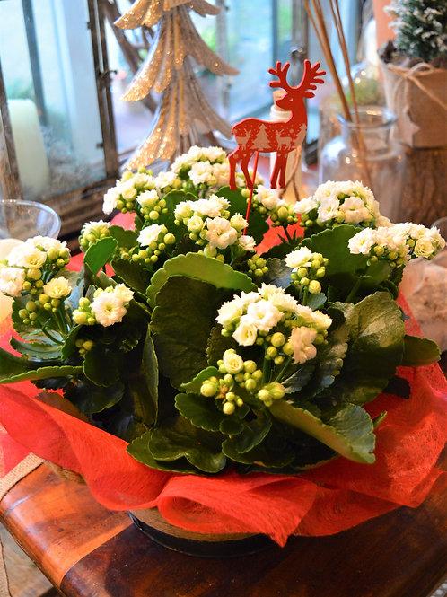 Christmas Kalanchoe Planter