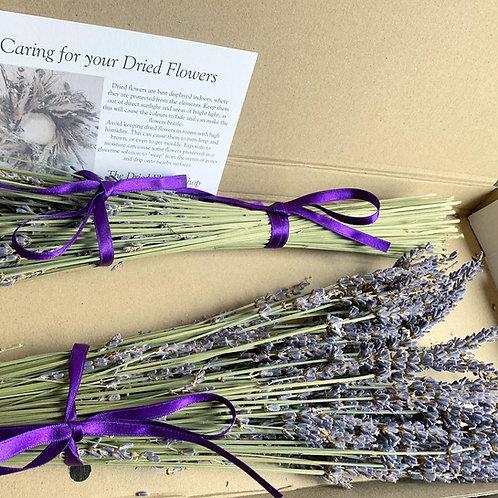 Letterbox Lavender