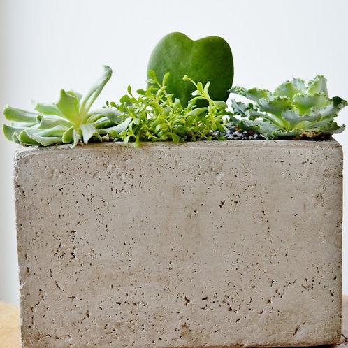 Contemporary Succulent Planter