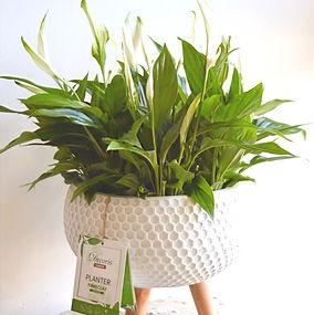 Peace Lily Tripod Planter .jpg