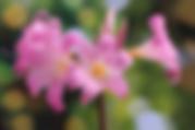 easter-lily-4886534__340.webp