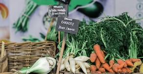 Ferritiiniarvojen kohentaminen kasvisruokavaliolla