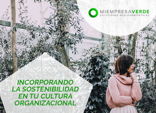 Sostenibilidad en tu cultura organizacional