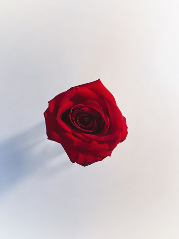 single-red-rose HD.jpeg