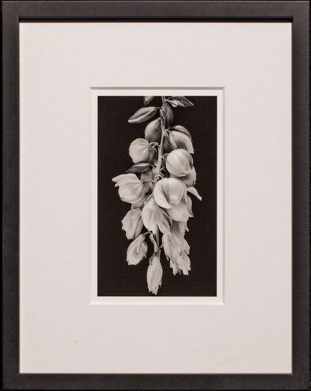 Jodie Hulden, Yucca Blossom