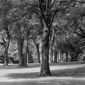 Dayton Trees