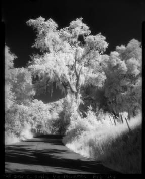 Infrared Film