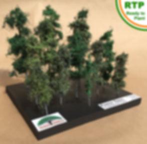 Forest-Trees-800-RTP.jpg