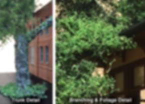 Hero-Trees-O-Foliage-CU-500.jpg