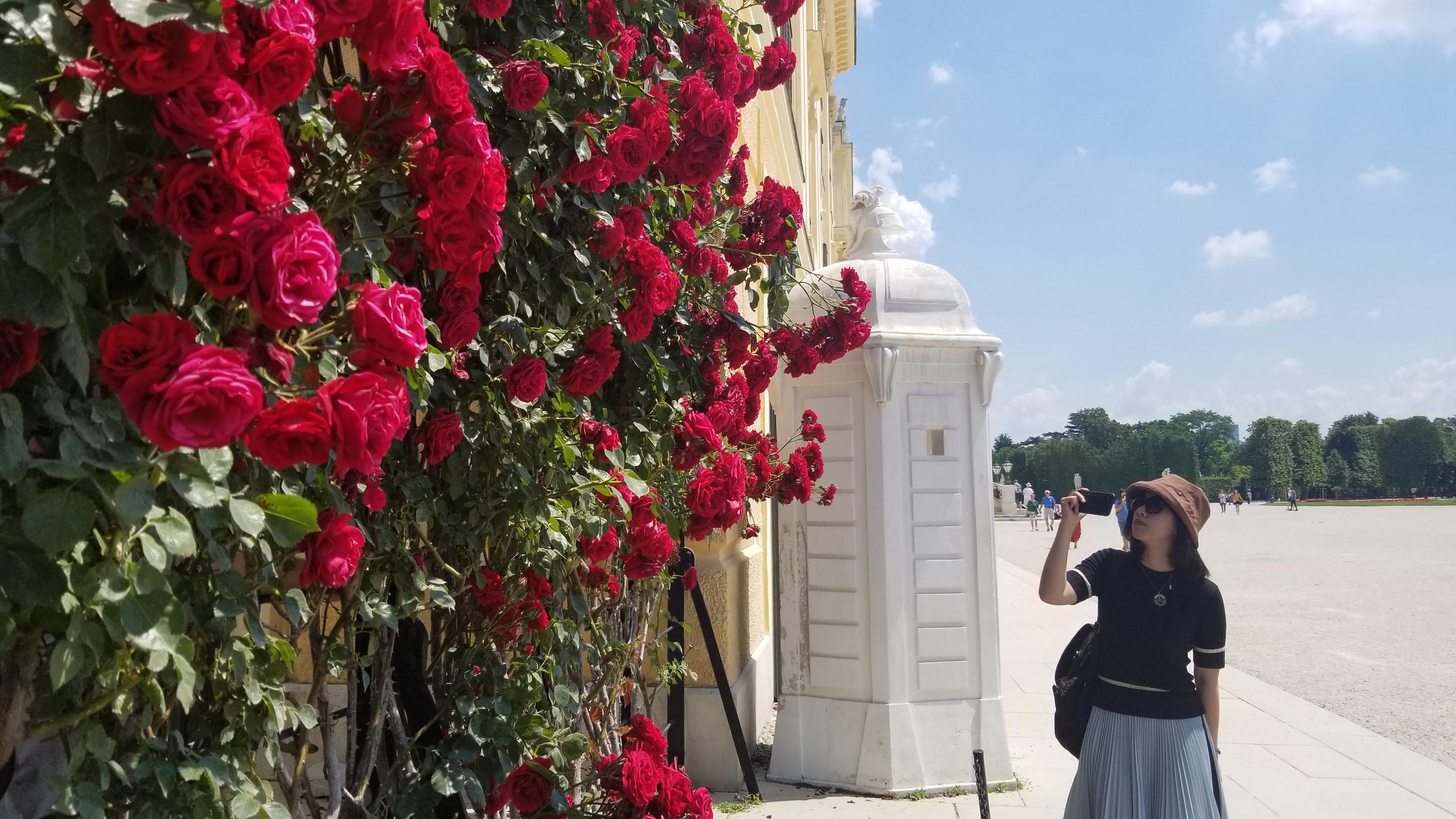 Rosas en schönbrunn