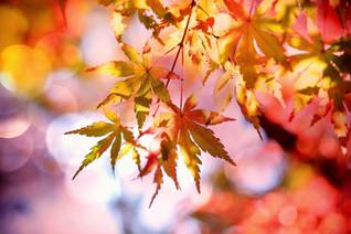 8 Reasons I Am Not A Fan Of Autumn