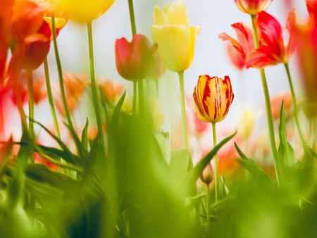 Spring Time Quotes