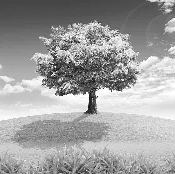 tree-wallpaper-16_edited.jpg