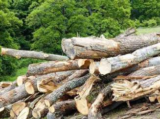 Deforestation-Romania-Hannes-Knapp_12108