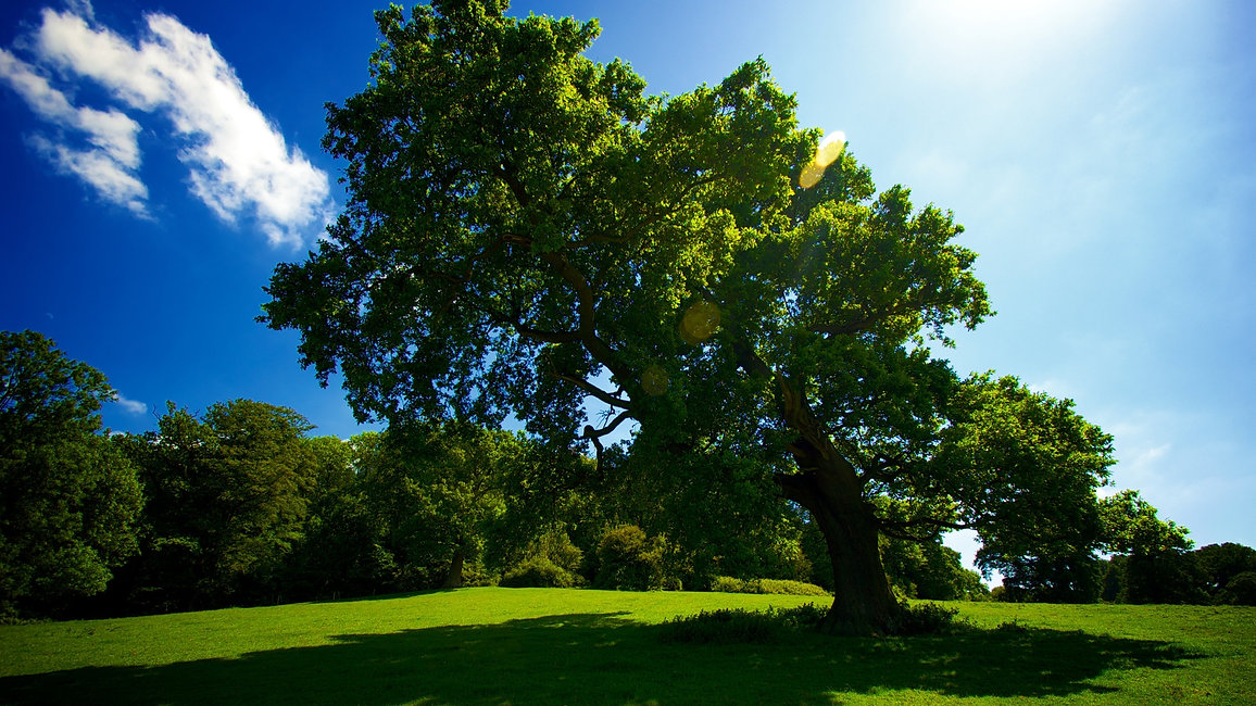 Tree-wallpaper-to-use-as-background-18.j