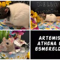 Athena, Artemis & Esmerelda