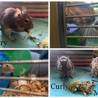 Larry, Curly & Moe