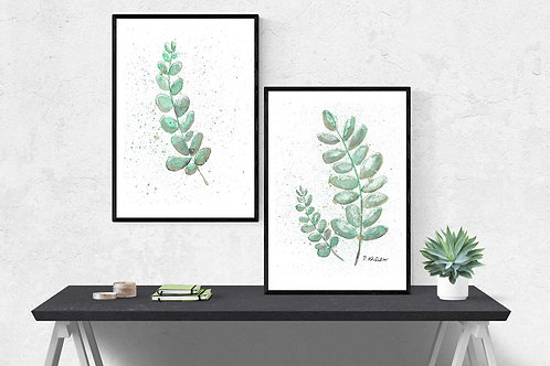 Poster Eukalyptus