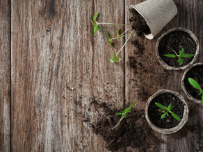 5 Lebensbereiche, die du in der Gruppe noch nachhaltiger gestalten kannst
