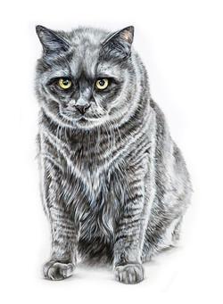 portrait of a grumpy grey cat, Grumpy Cat art, Custom Pet portrait by TayloredIllustration