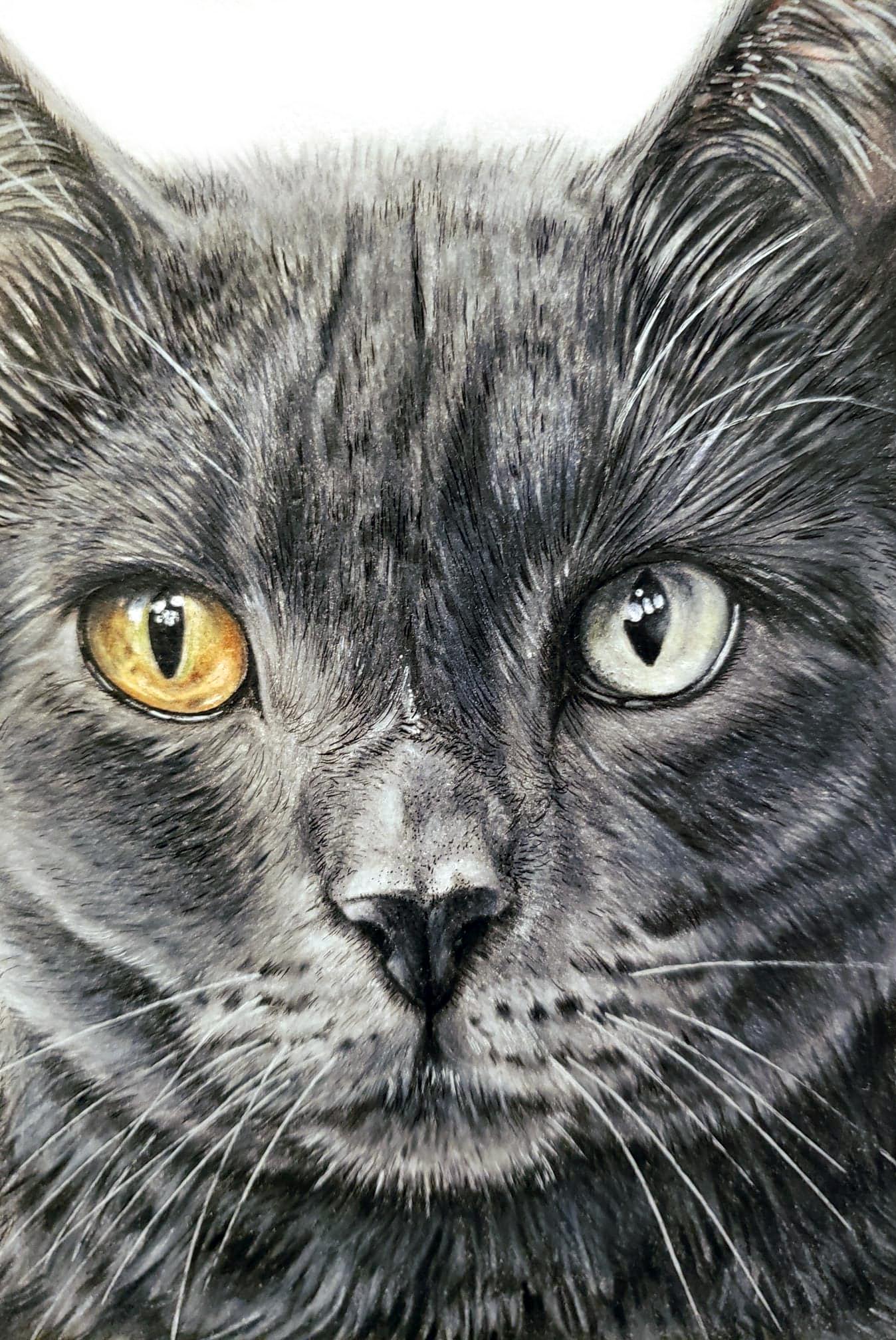 Gray Cat Pet Portrait