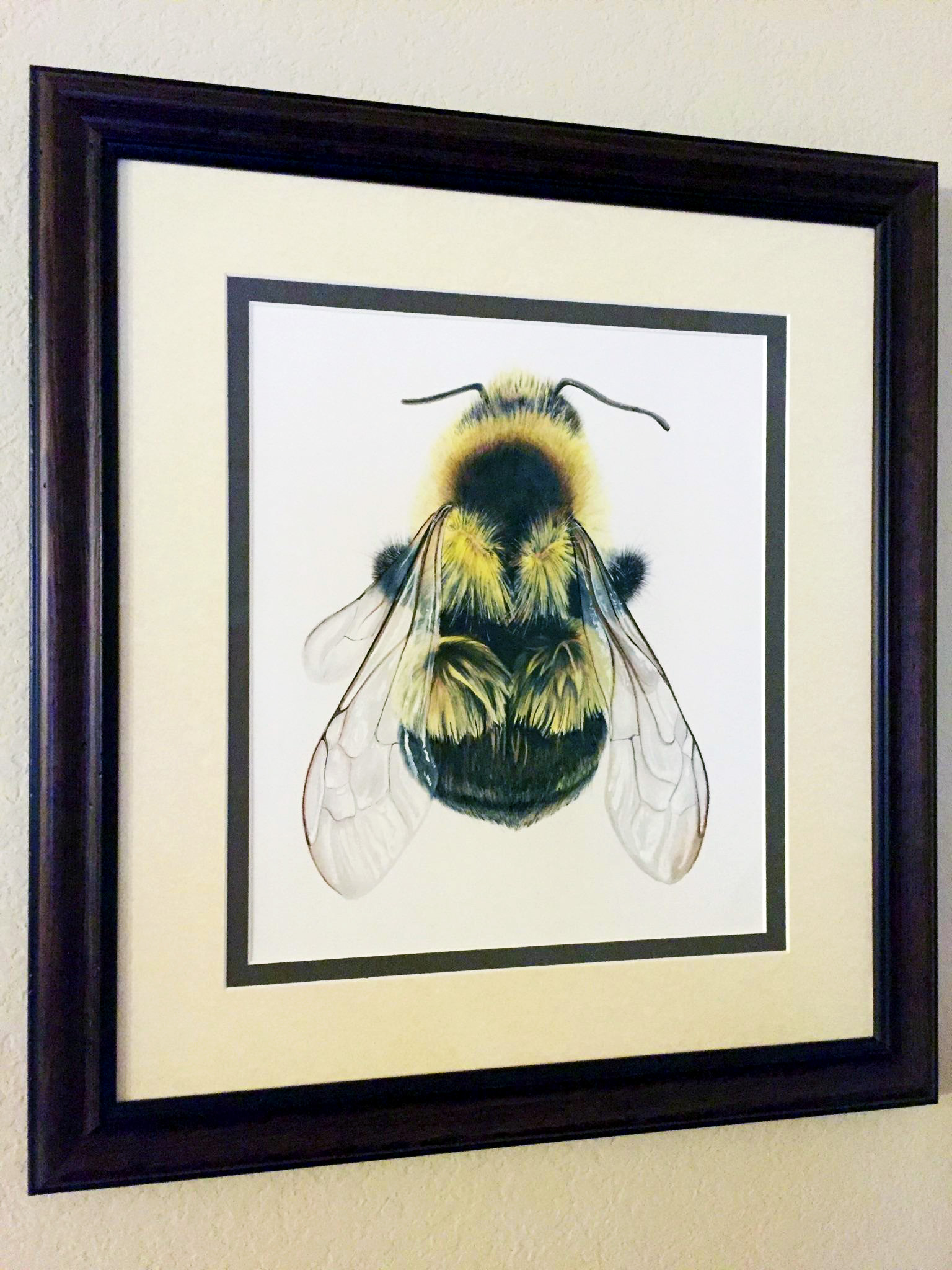 Fine Art Colored Pencil Drawing of a Bumble Bee, Detailed drawing of a bee, photorealistic colored p