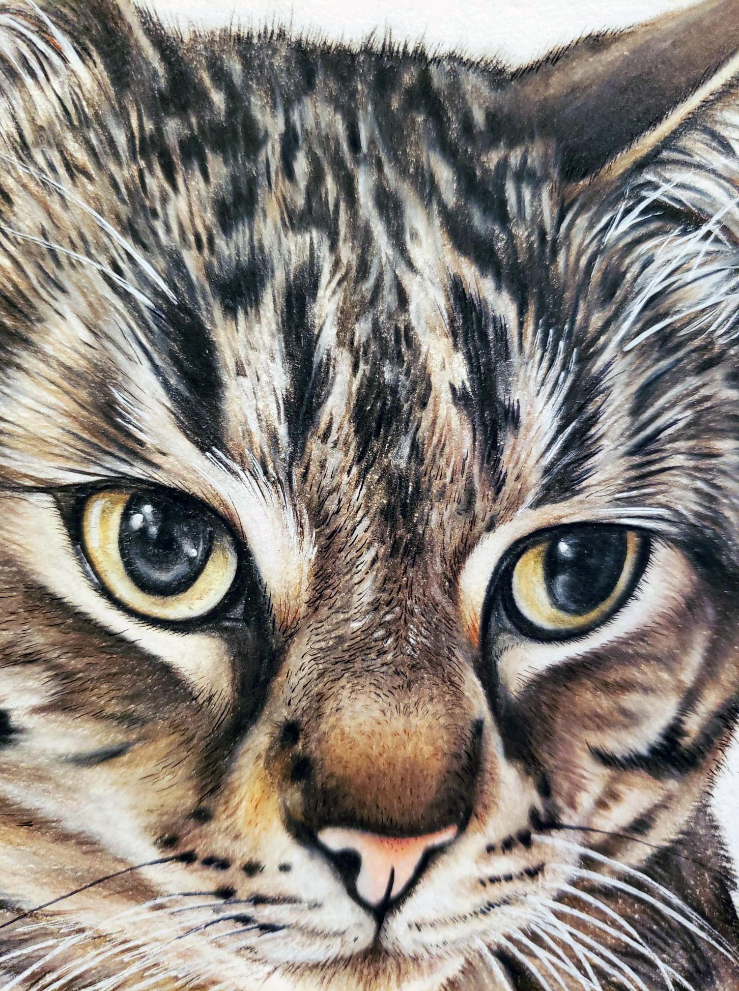 Detailed Tiger Cat Pet Portrait