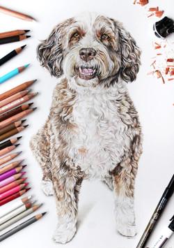 hand drawn custom pet portrait of a goldendoodle. photorealistic pet portrait of my dog. Taylor Walk