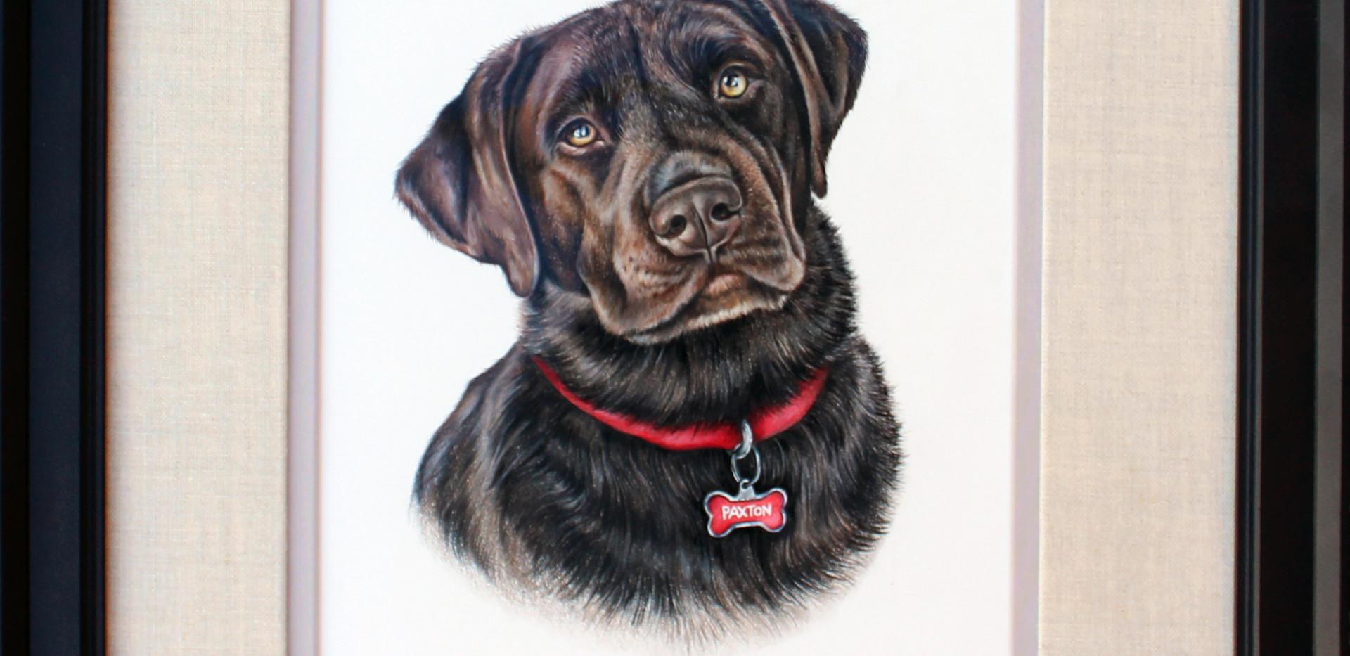 Pet Portrait -Paxton