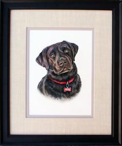 custom colored pencil pet portrait of chocolate lab, special gift for lab lovers, Labrador Retriever
