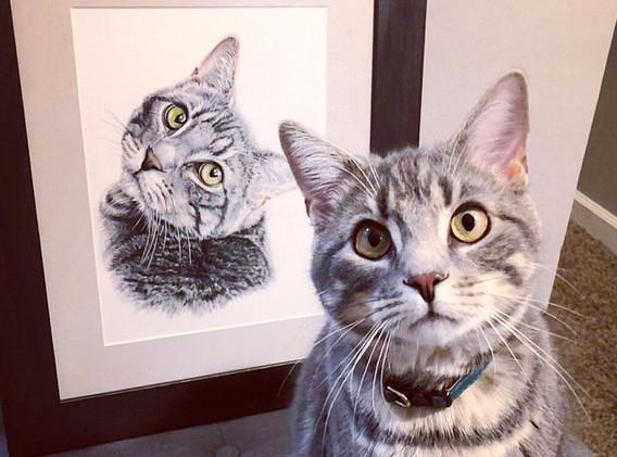 Pet Portrait - Remy