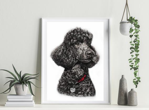 Pet Portrait - Monty