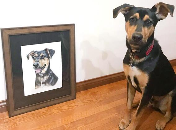 Pet Portrait - Cooper