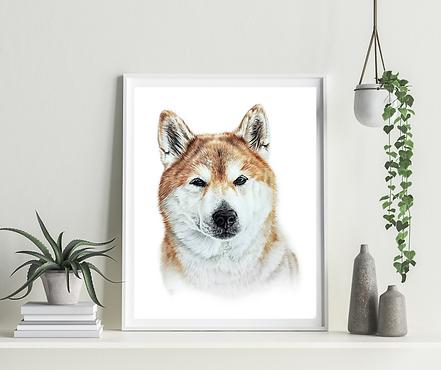Custom Pet Portrait of Shiba Inu, colored pencil drawing of shiba inu dog, Langley Animal Protections Society Annual Gala