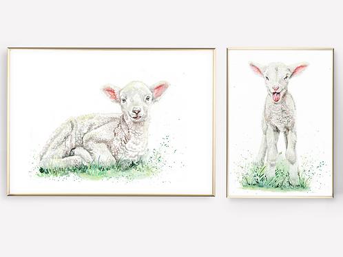 Lovable Lambs - Giclée Print SET