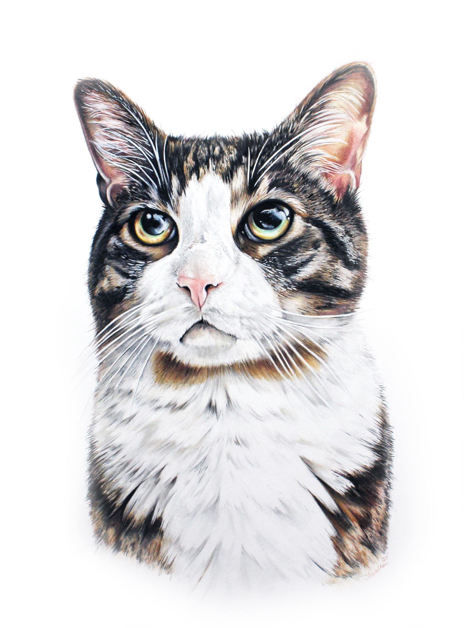 Classically Hand Drawn Colored Pencil Pet Portrait of Striped & White Tabby Cat by TayloredIllustrat