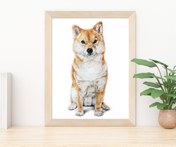 Custom Pet portrait of a Shiba Inu by TayloredIllustration, pet portrait artist in Indianapolis IN
